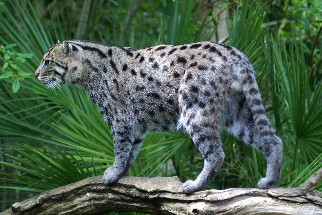 Chat Cat Fihing
