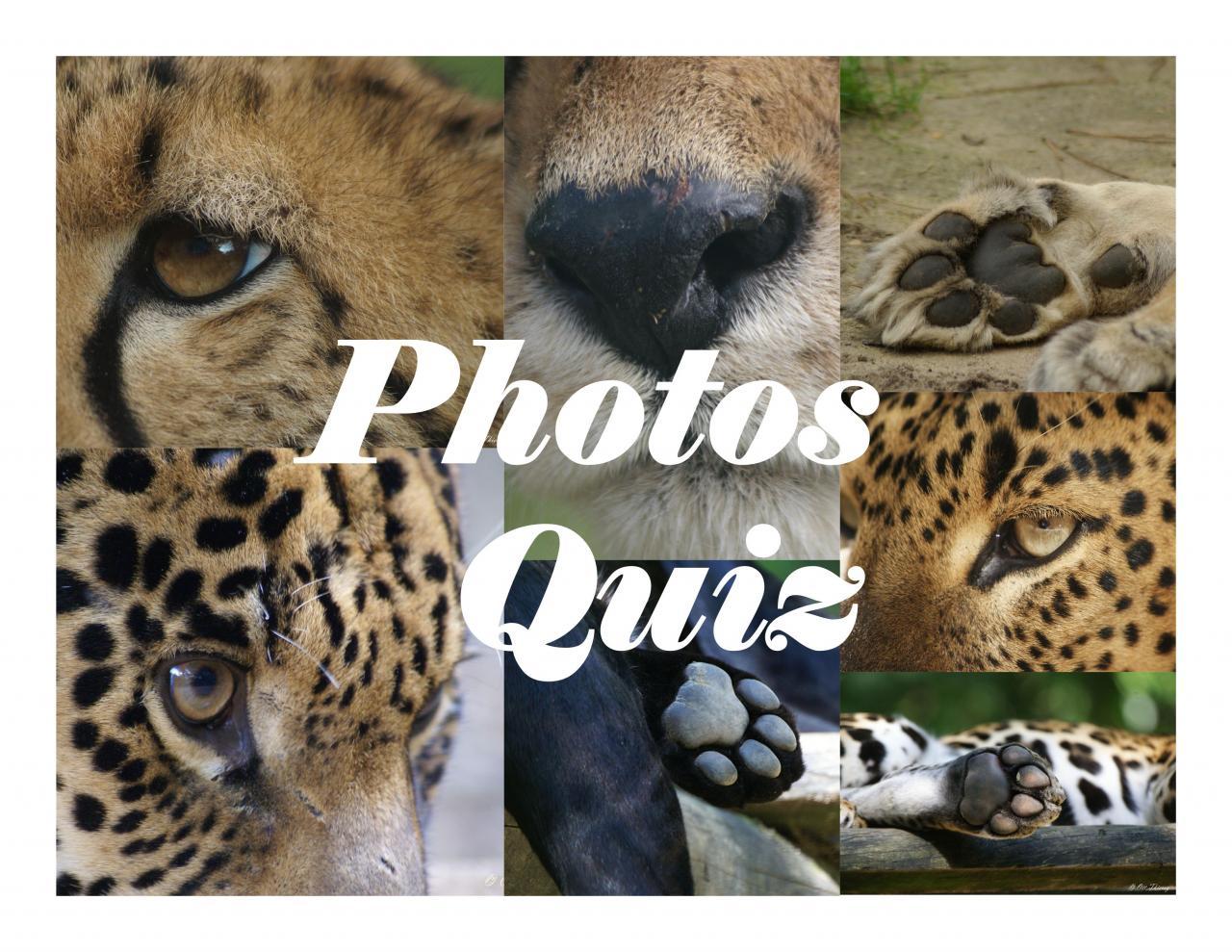 Quiz Photos